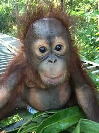 301 Mejores Imágenes De Changuitos Bebes Monkeys Animal Babies Y