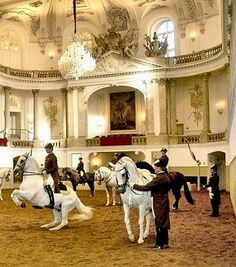 Austria Travel Inspiration - The Spanish Riding School of Vienna - Home of the Lipizzaner Stallions.Another special travel memory for me! Dressage, Oh The Places You'll Go, Places To Travel, Spanish Riding School Vienna, Europe Centrale, White Horses, Central Europe, Eastern Europe, Horse Riding