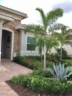 Queen Palm Tree Landscaping Ideas Google Search Drought Desert Scaping Pinterest Landscaping Ideas Palm And Landscaping