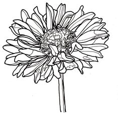 Zinnia Coloring Pages - Best Coloring Pages For Kids Flower Coloring Pages, Colouring Pages, Coloring Pages For Kids, Flower Line Drawings, Art Drawings, Drawing Flowers, Paint Flowers, Drawing Faces, Arte Sketchbook