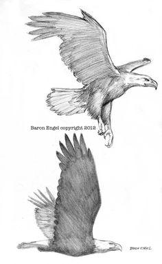 Bald Eagles 02 by *Baron-Engel on deviantART