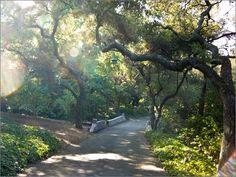 Descanso Gardens in Southern California