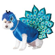 peacock pet costume.. I really am sorry for this because that dog for one does not look that happy.
