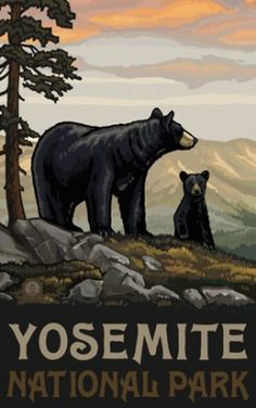 Yosemite Bears at The Redwoods In Yosemite