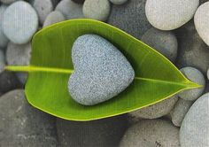 nature hearts-leaf and stone