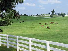 Horse Farm on the edge of town. Lexington, KY.