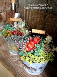 Great idea for patio...buckets of succulents.  container gardening, landscaping, gardening,