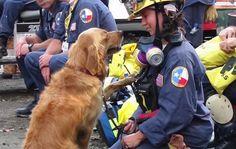 Bretagne's 16th birthday 9/11 search and rescue dog