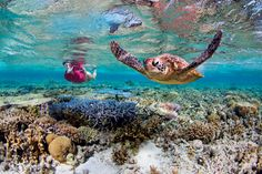 Swimming with turtles on the Great Barrier Reef is just one of many awesome marine animal encounters.