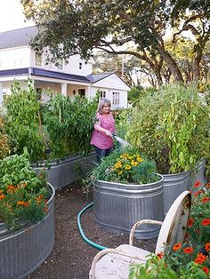 Gophers and other critters ruining your veggies? Plant them in galvanized troughs! #gardening: