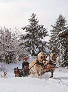 a joyful winter Christmas .. X ღɱɧღ || Totaly Outdoors: I love Dashing Through The Snow.