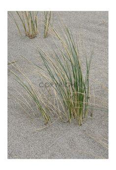 Gerade gefunden auf http://long-leg-photography-shop.fineartprint.de Pflanzen, Natur, Jahreszeiten, Ausschnitt, Blätter, Laub, Hintergründe, Wallpaper