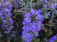 Garden violet flowers5 Flower Photos, My Photos, Bouquet, Garden, Flowers, Plants, Life, Garten, Bouquet Of Flowers