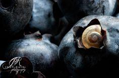 Blueberry Escargo
