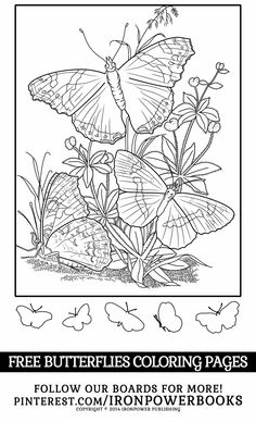 Butterfly Coloring Pages - Butterflies Coloring Book (Butterfly Coloring Books For Adults) (Volume Blank Coloring Pages, Coloring Pages For Kids, Coloring Sheets, Coloring Books, Butterfly Coloring Page, Free Adult Coloring, Autumn Painting, Up Book, Butterfly Pattern