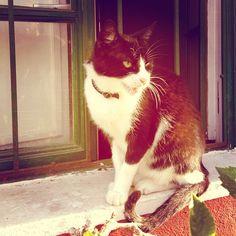 #cat #mogan #grancanaria #lomography #photooftheday #igramers #instagram #instagramers - @zuzanna_p- #webstagram