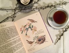 Sarah J. Loecker : Book recommendation- The Country Diary of an Edwar... Edith Holden, Still Life Photos, Book Reviews, Book Recommendations, Art Blog, Creative Inspiration, Childrens Books, Illustrators, Art Projects