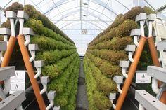 Desert hydroponic systems - Google zoeken