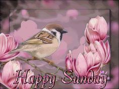 Happy Sunday cute day pink bird bear friend days of the week sunday sunday greeting sunday gif