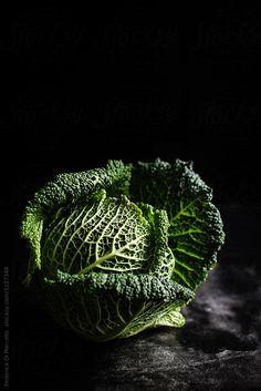 Savoy Cabbage by Federica Di Marcello | Stocksy United