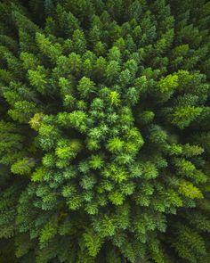 Tips of Green by Michael Shainblum - Photo 127943381 - 500px (trees, Washington state)