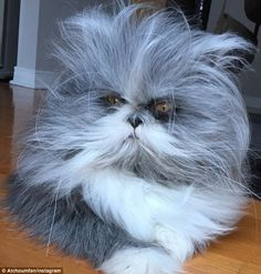 The animal is revealed to be a cat and is even Internet-famous in his own right ...