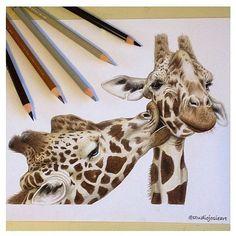 Imagem de giraffe, drawing, and animal Animal Sketches, Art Drawings Sketches, Animal Drawings, Giraffe Colors, Giraffe Art, Cute Giraffe Drawing, Realistic Drawings, Colorful Drawings, Kissing Drawing