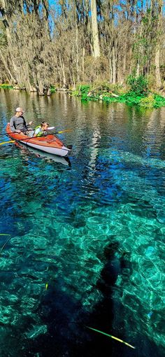 Best Florida Springs For Manatees And Unbelievably Clear Water