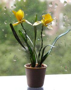 цветы из лака для ногтей
