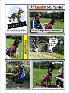 Tempo the podenco orito at dog training classes for reactive dogs rescue dog