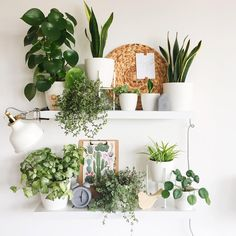 indoor plants, plants wall, wall decors, diy plant decor wall, living room decor… - All For Herbs And Plants House Plants Decor, Plant Decor, Bedroom Plants, Bedroom Decor, Decor Room, Simple Apartment Decor, Apartment Design, Decoration Plante, Interior Plants