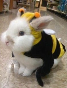 This is five-year-old lionhead rabbit, Draiman, dressed as a bumble bee.Bumble-Bunny Photograph by Rachelle Pickette The photo says it all—literally. Funny Bunnies, Cute Bunny, Bunny Rabbit, Animal Pictures, Cute Pictures, Baby Animals, Cute Animals, Funny Animals, Pet Costumes