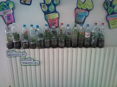 Our terrariums using recycled water bottles. cut open the water bottle. Plant a small flower or a bean. Tape it up, water it and then leave it.