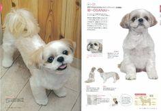 Shih Tzu Grooming Style Photos   Details about Dog Grooming Shih Tzu The seasonal hair arrangement ...