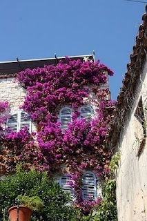 Attractive Provence http://www.travelandtransitions.com/european-travel/