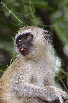 IMG_4394 #wildlife #africa