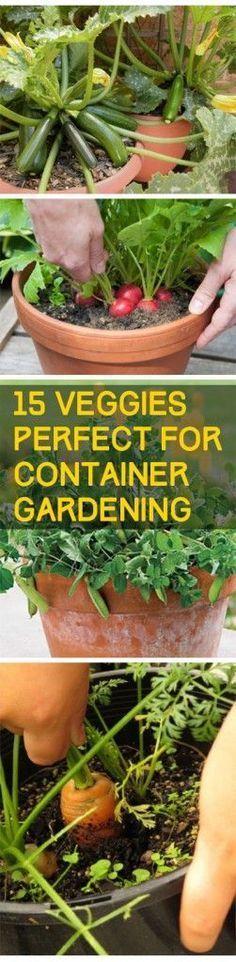 Veggies Perfect for Container Gardening - DIY Garden Diy Gardening, Indoor Vegetable Gardening, Veg Garden, Organic Gardening Tips, Edible Garden, Lawn And Garden, Terrace Garden, Veggie Gardens, Vegetables Garden