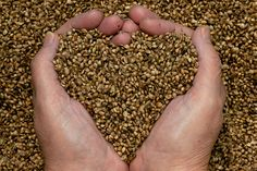 Hemp seeds' impressive nutrition story makes it a must-have addition to your shopping list.