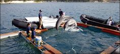 Navy Dolphins Scout for Mines in Croatia - Last week, six dolphins took off from their HQ at the U.S. Navy's Marine Mammal Program in San Diego on a flight to Zagreb, Croatia. Their mission (whether or not they chose to accept it): Find unexploded bombs and shells off the coast of Dubrovnik