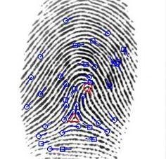 Fingerprint Accuracy Stays the Same Over Time