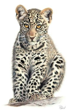 Leopardenjunges (young leopard), drawn in colored pencil, by Peter Höhsl