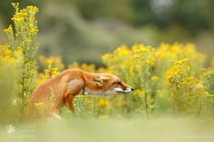 """<strong><a href=""""http://www.roeselienraimond.com"""">RoeselienRaimond.com</a> 