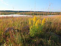 Kasota Prairie Preserve