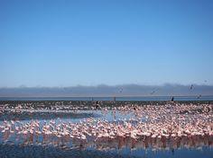 walvis bay namibia flamingos - Google Search