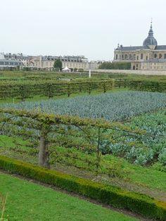 Visite du Potager du Roi à Versailles (78) le samedi 15 juin 2013 http://www.pariscotejardin.fr/2013/06/visite-du-potager-du-roi-a-versailles-78-le-samedi-15-juin-2013/