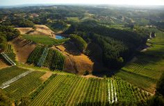 The Adelaide Hills South Australia. Aerial photo of Apple Orchards in the Lenswood, Forest Range area. Photo by Dragan Radocaj