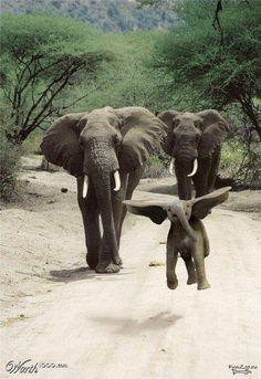 Look at the adorable flying elephant, @KarenSheelar!