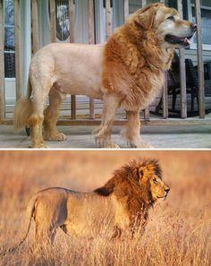 I cani protagonisti di questa fotoraccolta hanno una cosa           in comune: il loro aspetto ricorda qualcos'altro o qualcun           altro. C'è chi assomiglia a un leone o può essere paragonato           a un orsacchiotto di peluche, chi sembra avere le sembianze di un muffin con l