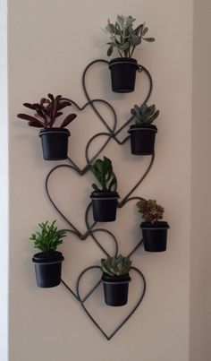 Succulents displayed in a wall hanging candle/voltive holder