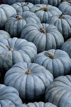 blue pumpkin - Google pretraživanje